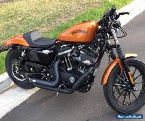Harley Davidson iron 883 for Sale